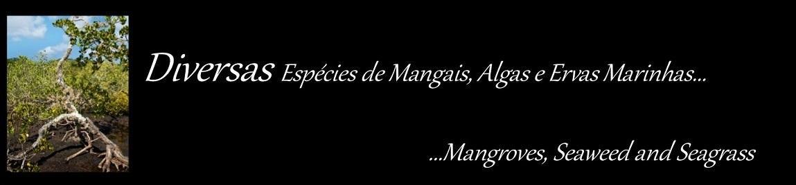 Mangais